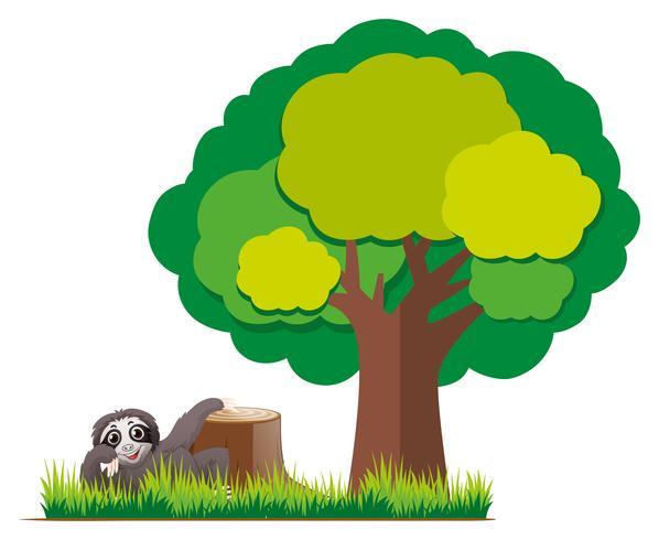 Sloth in the garden