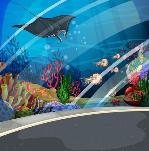 Akvarium med stingray simning