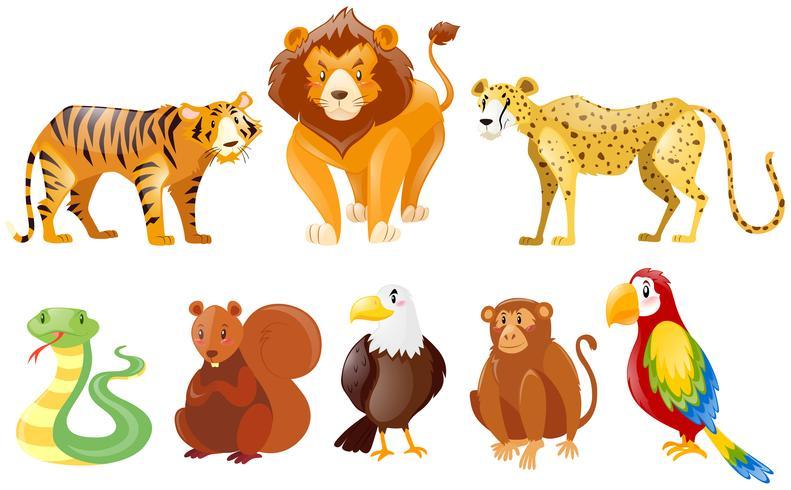 Sats av olika vilda djur vektor