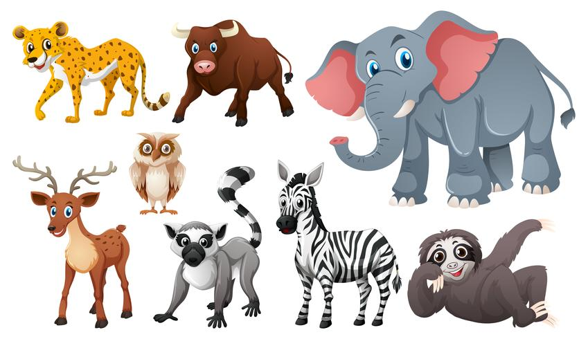 Many wild animals on white background vector