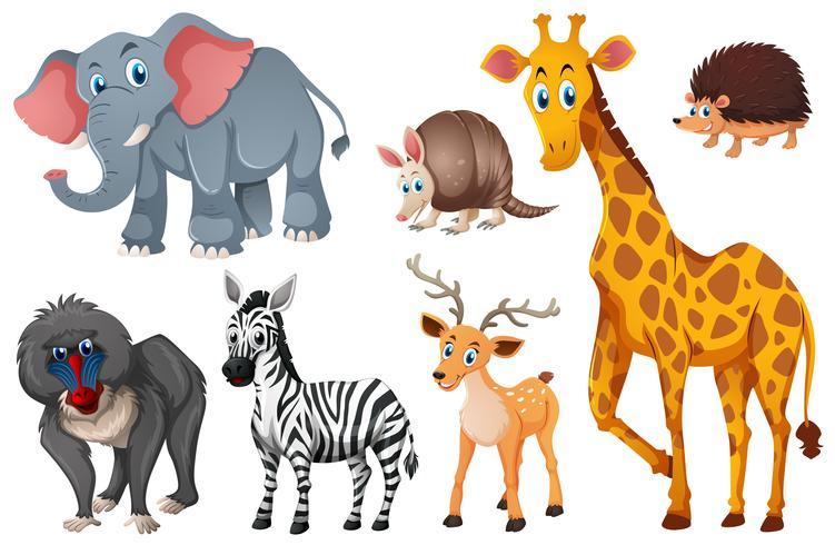 De nombreux types d'animaux sauvages