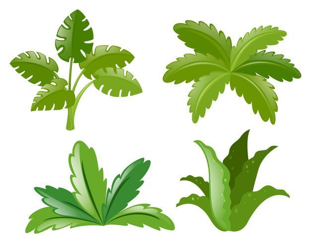Vier verschiedene Pflanzenarten