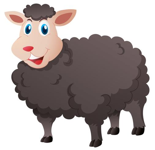 Cute black sheep on white background