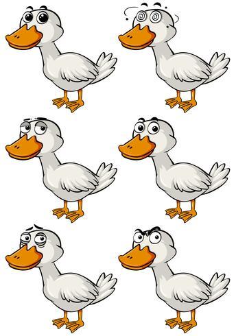 Pato con diferentes emociones faciales.
