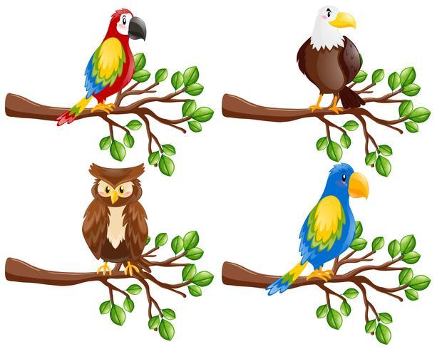 Diferentes tipos de pássaros no galho