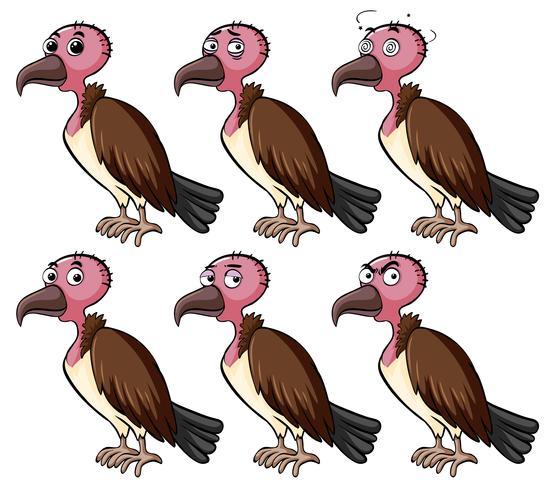 Vulture med olika ansiktsuttryck vektor
