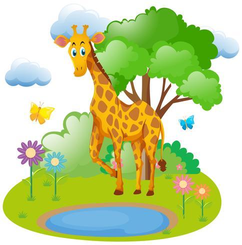 Giraff som bor i skogen