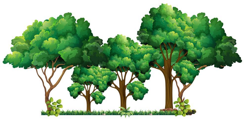 Szene mit vielen Bäumen
