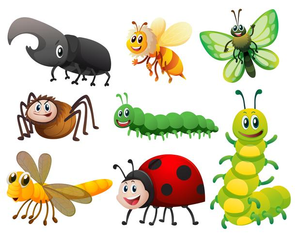 Different kinds of small insects vector