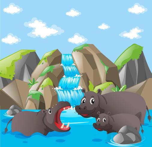 Familia de hipopótamos en la cascada