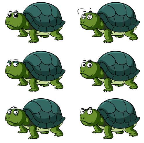 Tartaruga con diverse espressioni facciali vettore