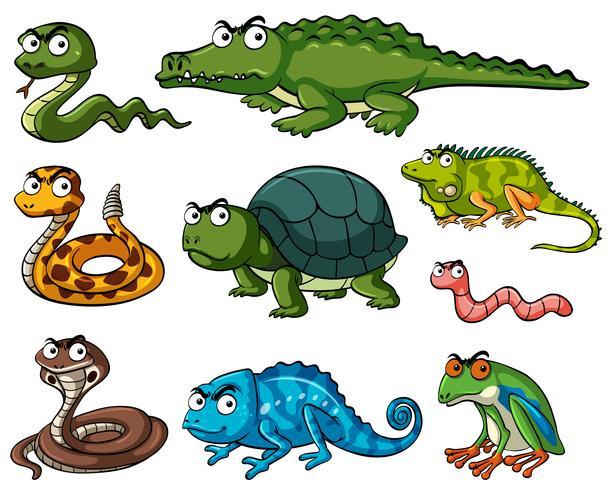 Verschiedene Arten von Reptilien