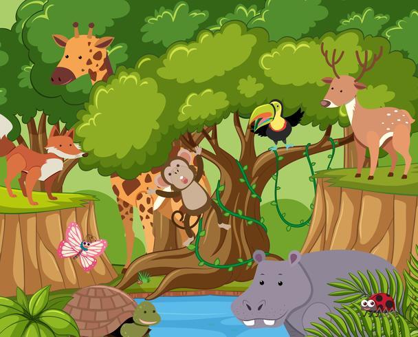 Animais selvagens vivem na floresta