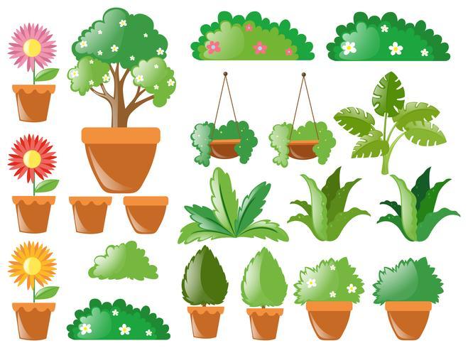 Verschiedene Pflanzenarten
