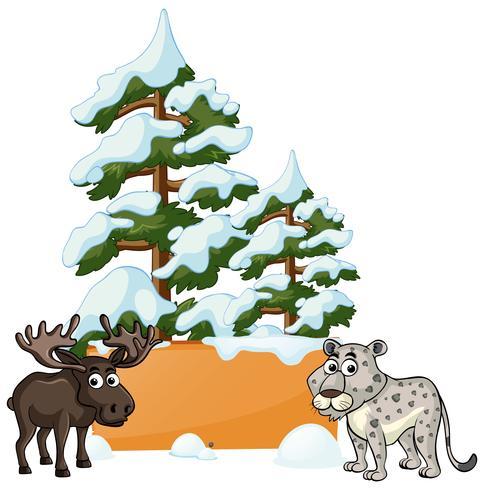 Elch und Gepard im Schnee