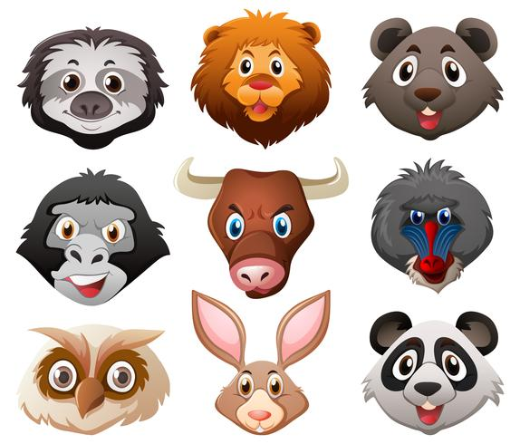 Faces of wild animals
