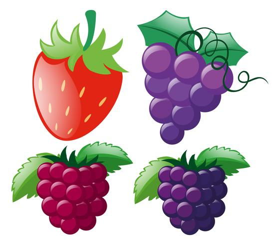 Four types of berries vector