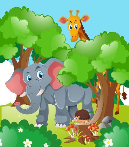 Girafa e elefante na floresta