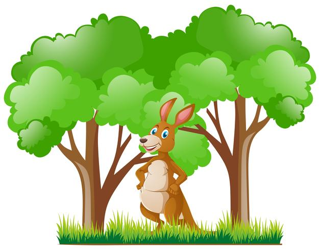 Kangaroo standing in forest
