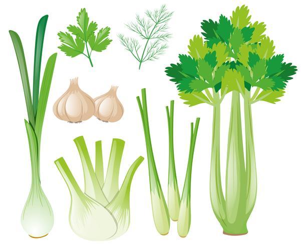 Verschillende groentesoorten