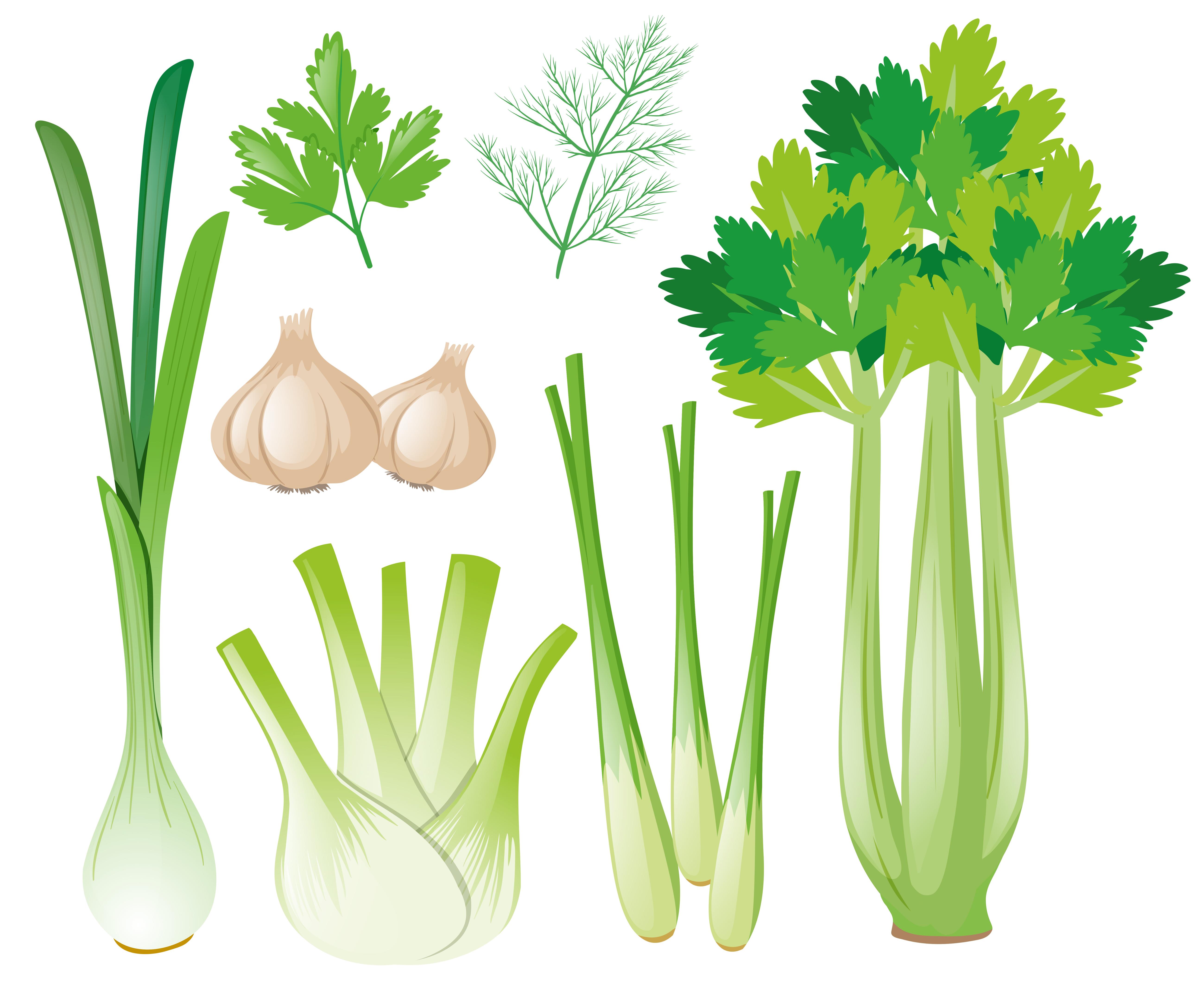 Differen types of vegetables - Download Free Vectors
