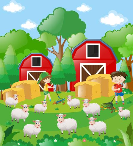 Jongens en schapen op het erf