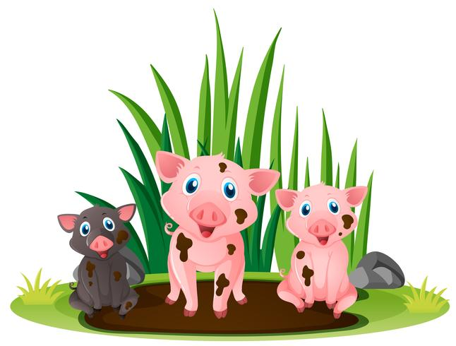 Three little pigs playing in muddy puddle