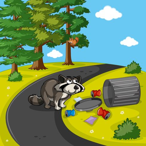 Racoon searching trash in park