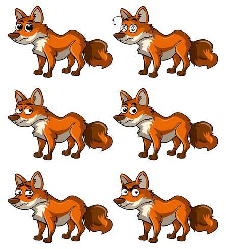 Fox con diverse espressioni facciali