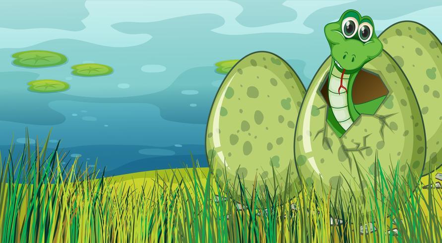Grön orm kläckande ägg vid dammen