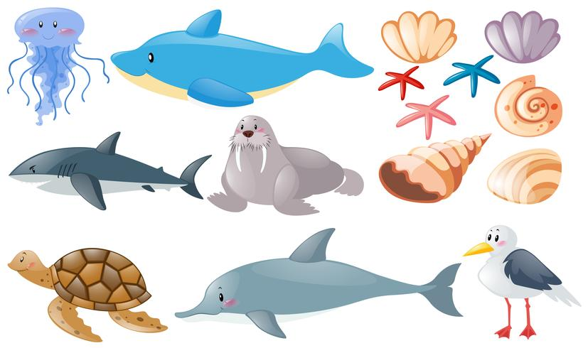 Different types of sea animals vector