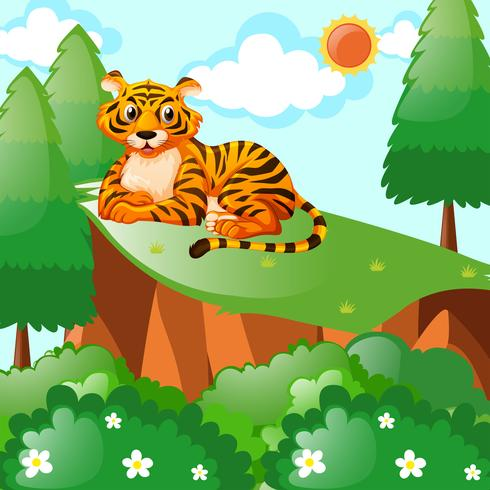 Tiger sitting on the cliff