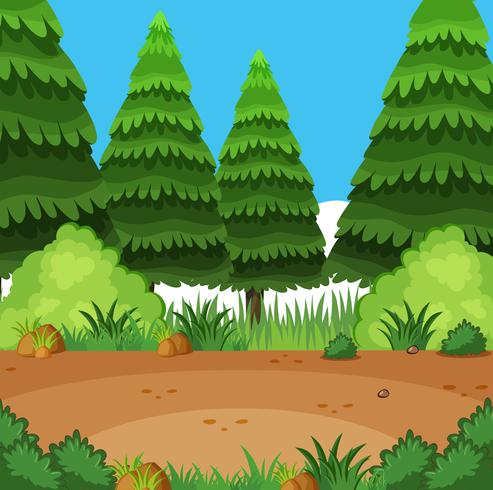 Background scene with pine trees