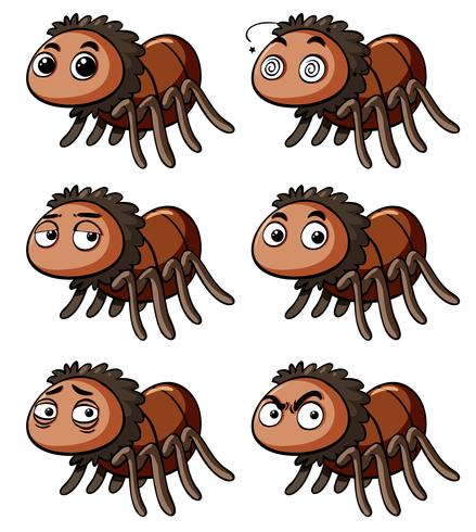 Brown spider with different emotions