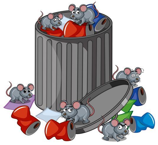 Många råttor söker trashcan