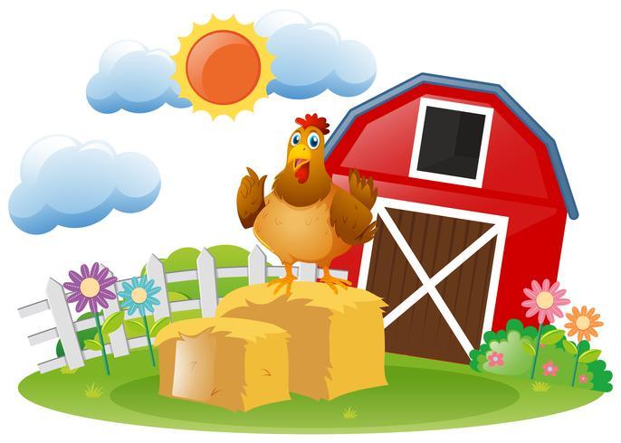 Gallo en la granja