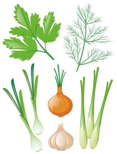Diferentes tipos de vegetais em branco