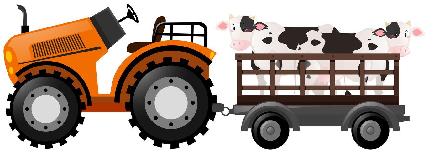 Tractor naranja con dos vacas en carro