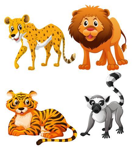 Tigrar och lejon på vit bakgrund