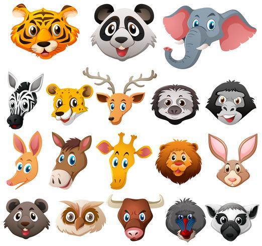 Different faces of wild animals