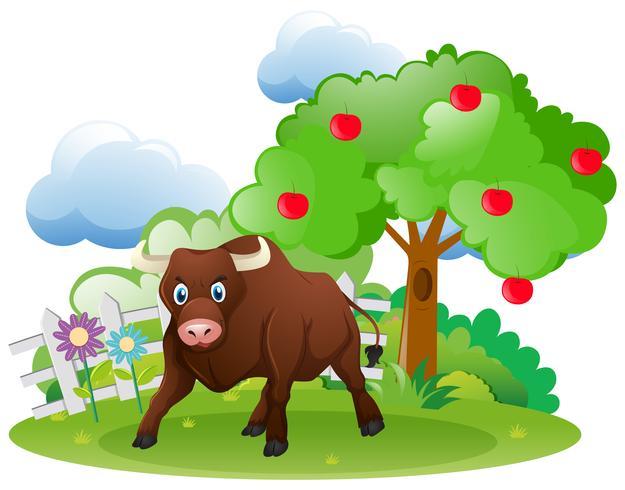Stier die zich in tuin bevindt