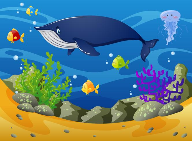 Balena e piccoli pesci sotto il mare