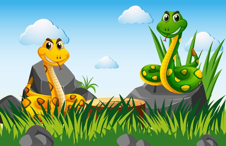 Two snakes in the garden