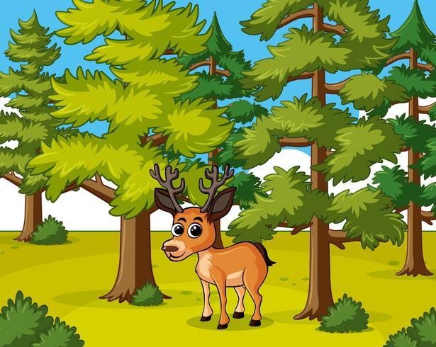 Hjort som bor i skogen