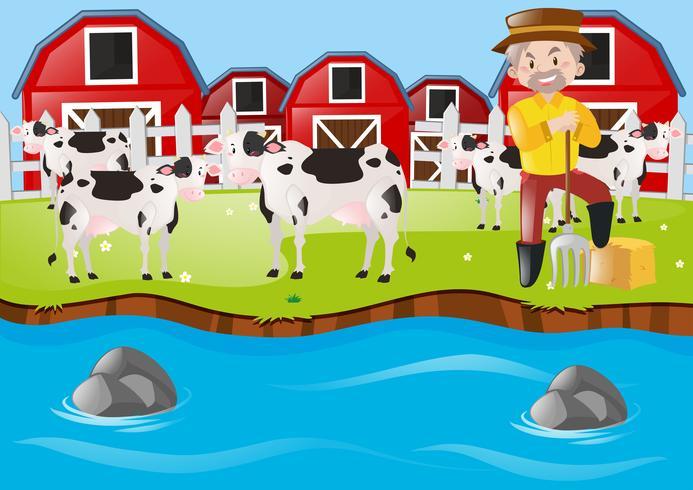 Farmer and cows on the farmyard