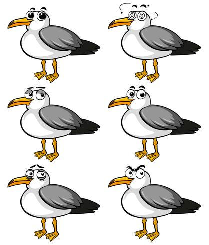 Pigeon birds with different facial expressions