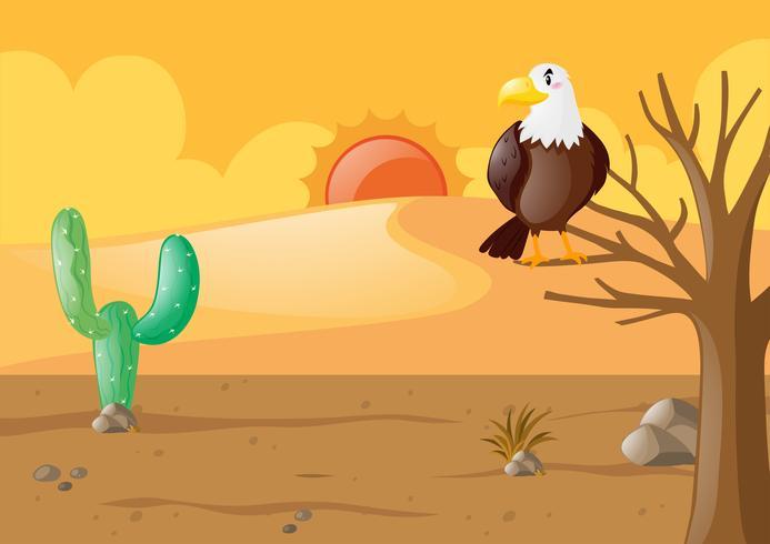 Adler in der trockenen Wüste