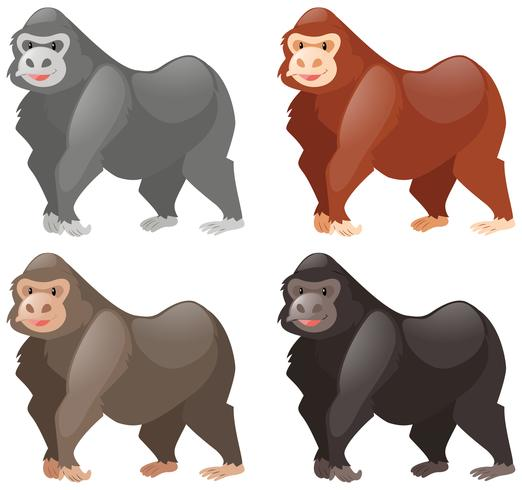 Gorillas in different colors