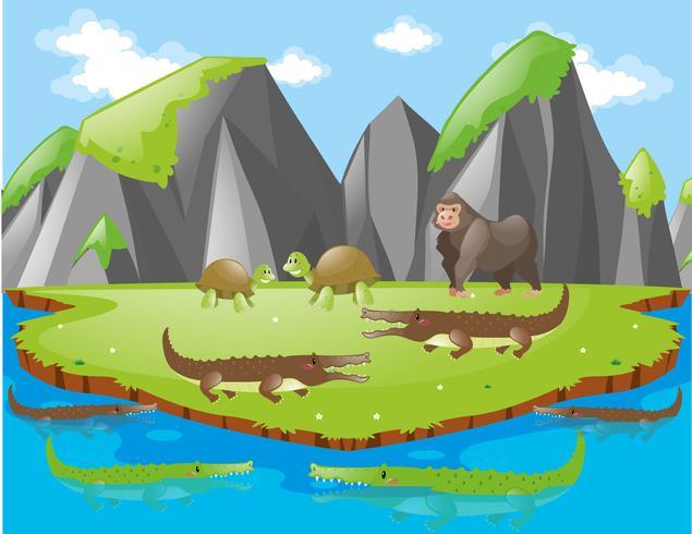 Crocodilos e outros animais na ilha