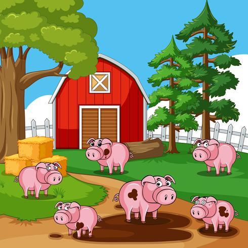 Schweine in schlammigen Pfützen auf dem Bauernhof vektor